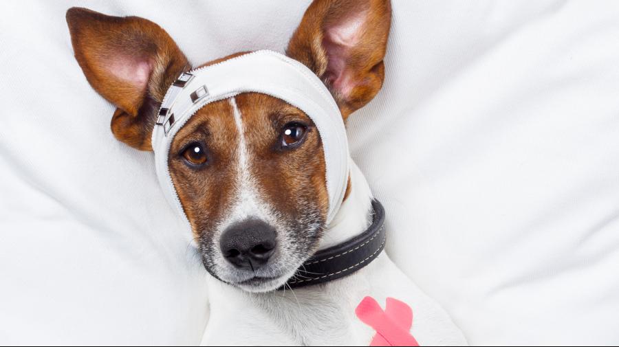 clinique-veterinaire-ste-anne-des-plaines-urgence.png