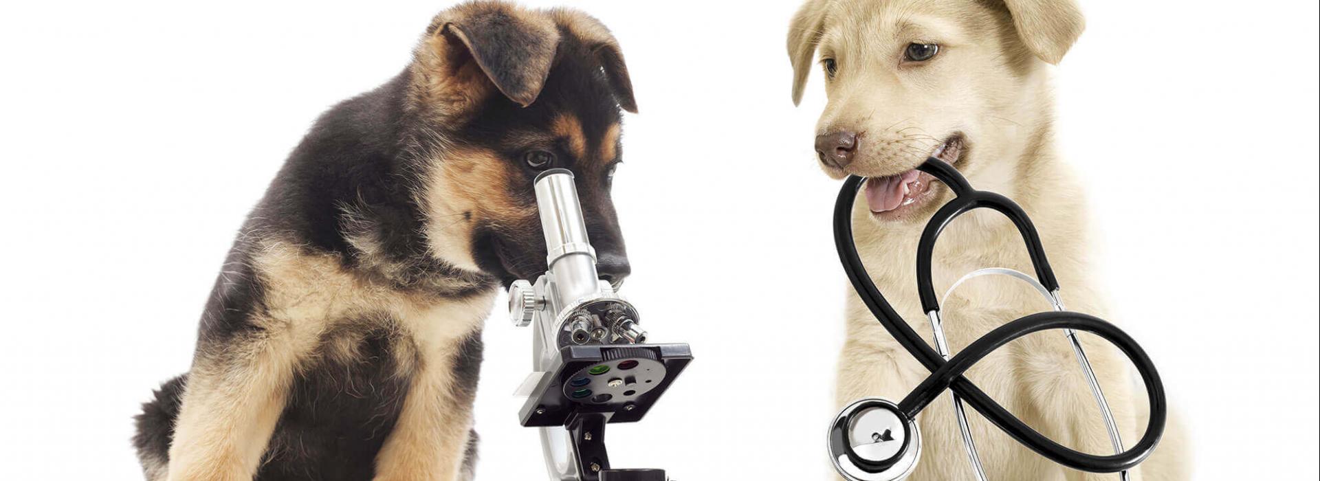 medecine-generale-clinique-veterinaire-ste-anne-des-plaines-1.png