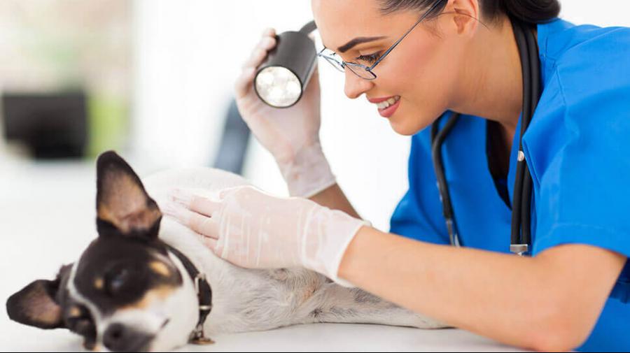 medecine-generale-clinique-veterinaire-ste-anne-des-plaines-3.png