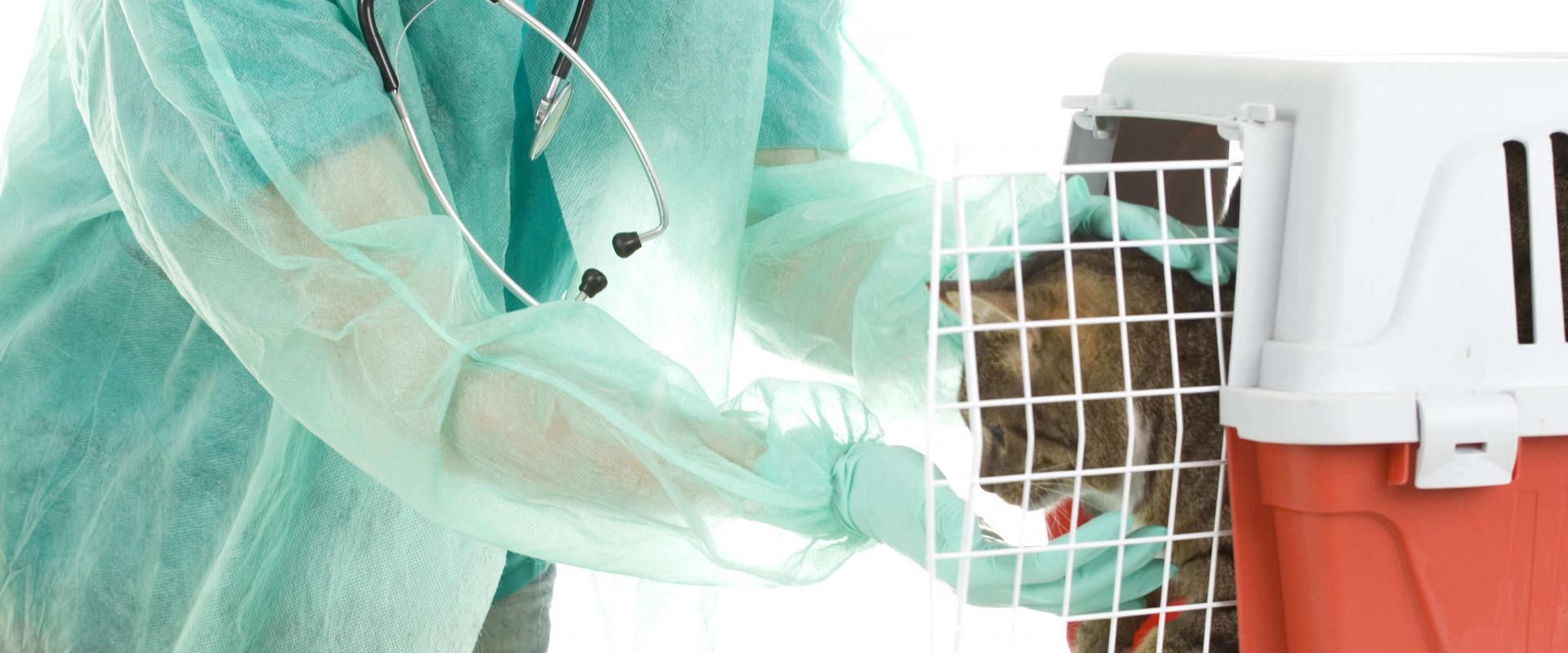 sante-nerfs-clinique-veterinaire-ste-anne-des-plaines-1.png