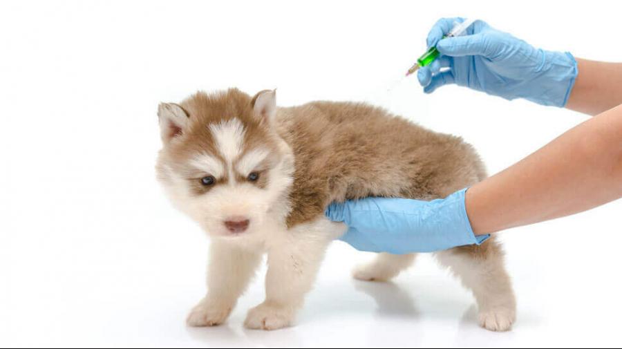 votre-animal-clinique-veterinaire-ste-anne-des-plaines-2.png