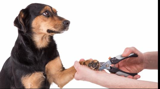 Clinique Vétérinaire de Ste-Anne-des-Plaines, La santé et le bien être de votre animal est notre priorité!